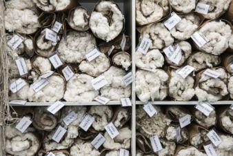 Baumwolle-Laender.jpg