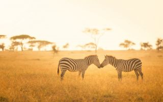 Zebras-Afrika-Nationalpark.jpeg