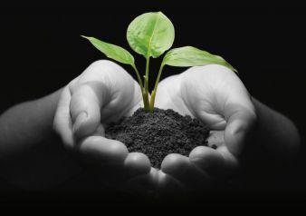 Umwelt-Pflanze-Hand-Klima.jpg