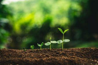 Oeko-Tex-Pflanzen-Wachstum.jpeg