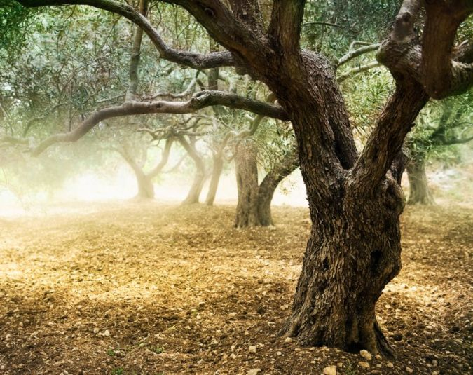 Olivenhainwet-green.jpg