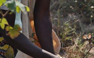 Baumwollernte Photos: Cotton made in Africa