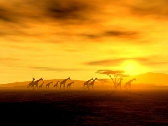 Afrika ist im Kommen lautet das Fazit des Forums Photo: fotolia