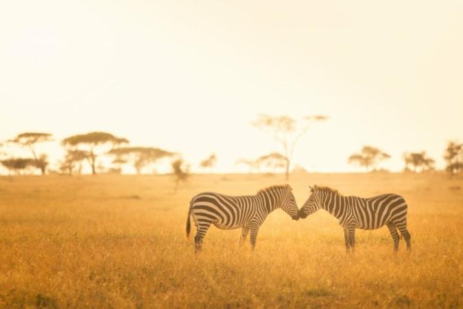 Zebras-Afrika-Nationalpark.jpeg