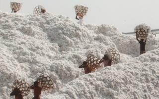 Indien-Baumwolle.jpg