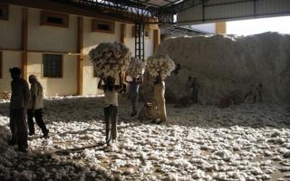 Baumwolle-Indien.jpg