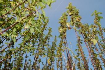 Vielleicht wird das mal ein Autositzbezug. Die Brennnesselpflanzen, die Mattes & Ammann auf der Schwäbischen Alb züchtet, wachsen und gedeihen Ph...