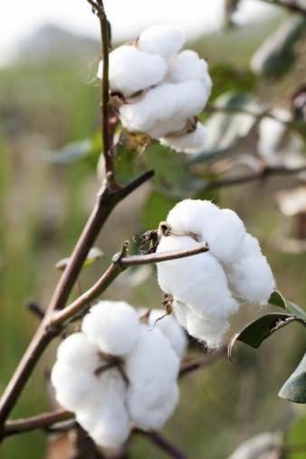 Leichter gesagt als getan: Von der Baumwolle über die Färbe- und Veredlungsprozesse bis hin zur Konfektion ist es ein langer Weg. Transparenz in...