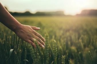 Feld-Getreide-spazieren.jpeg