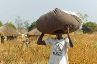 Cotonea-Anbau-Uganda.jpg