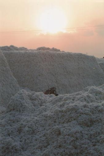 Indische-Baumwolle.jpg