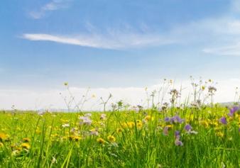 nachhaltigkeitwiesefotoliahauptbild-1477322154.jpg